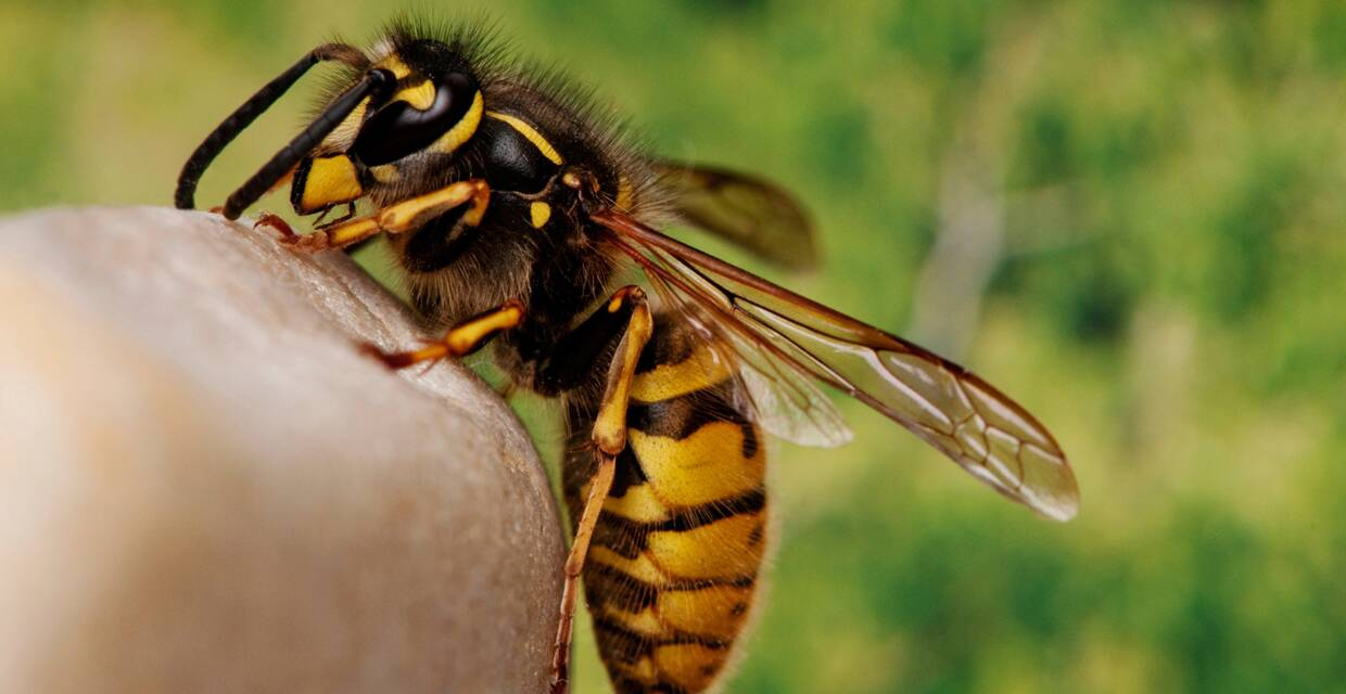 Types of Bee Sting Reactions and How to Act Fast