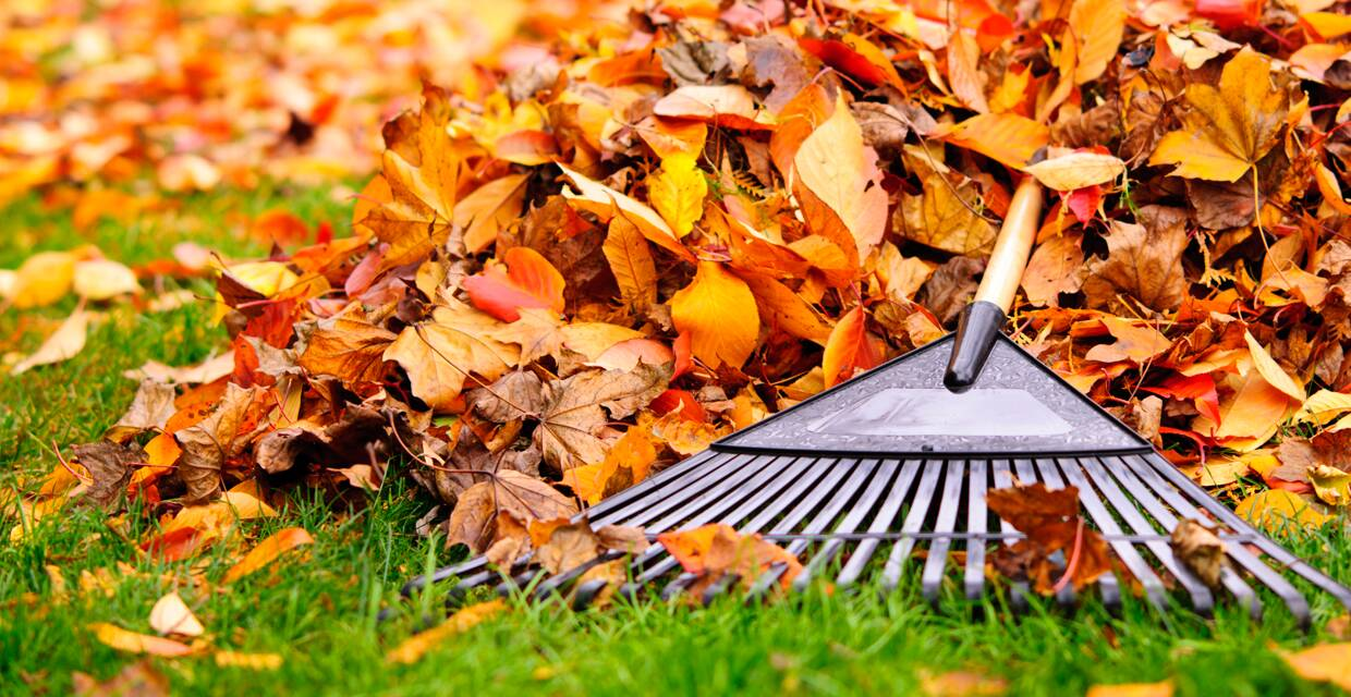 4 Ways to Stay Safe for Fall Yard Work
