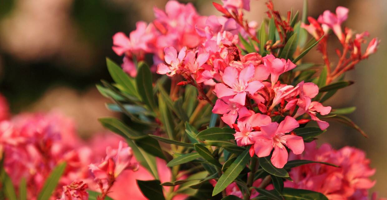 Don't Eat That! 6 Poisonous Plants to Avoid This Holiday Season